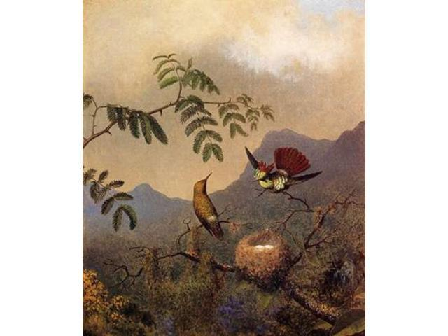Frilled Coquette Poster Print by  Martin Johnson Heade  (12 x 12)