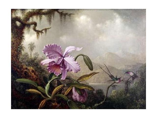Hummingbirds and Orchids Poster Print by  Martin Johnson Heade  (9 x 12)