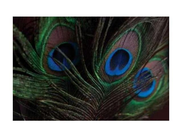 Peacock Feathers I Poster Print by Erin Berzel (20 x 28)