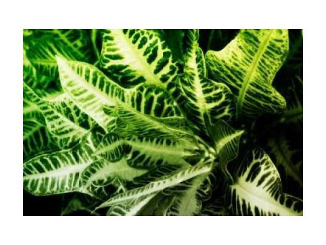 Tropical Foliage IV Poster Print by Alan Hausenflock (10 x 14)