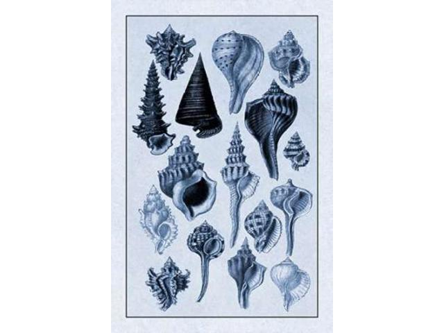 Shells: Trachelipoda #4 (Blue) Poster Print by  G.B. Sowerby  (12 x 18)