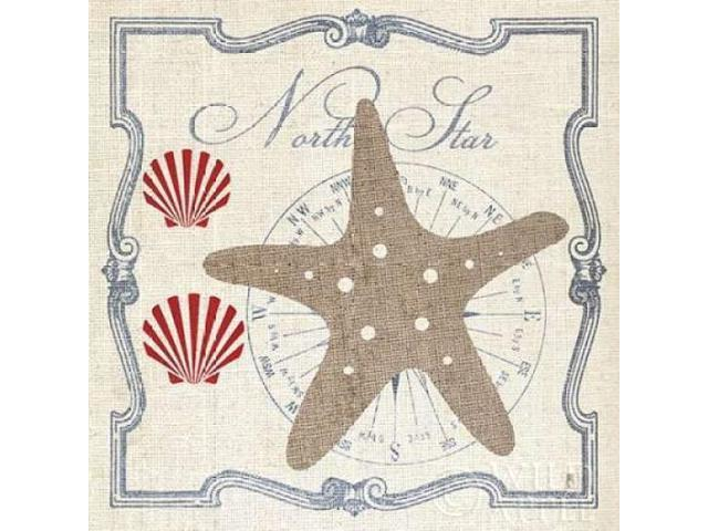 Pacific Starfish Poster Print by Studio Mousseau (24 x 24)