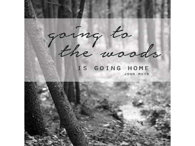 Going to the Woods Poster Print by Amber Berninger (24 x 24)