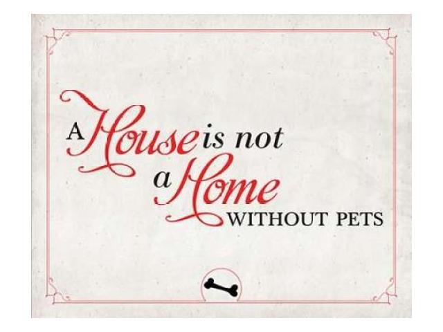 Home without Pets Poster Print by  SD Graphics Studio (24 x 30)