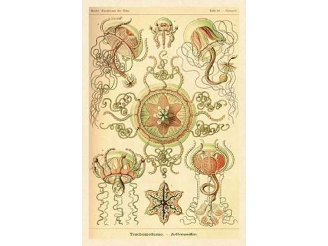 Haeckel Nature Illustrations: Trachomedusae - Jellyfish Poster Print by  Ernst Haeckel  (12 x 18)