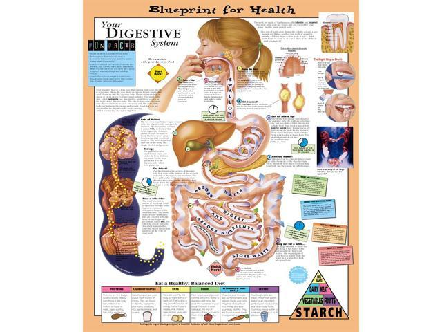 Blueprint for health your digestive system chart 20 x 26 newegg