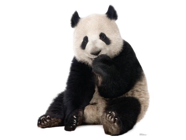 Giant Panda Cardboard Standup