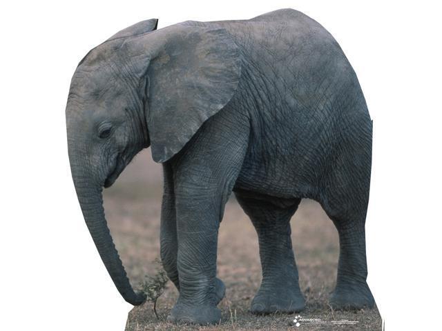 Elephant-Standup