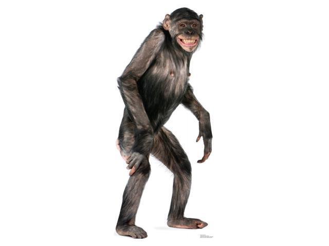 Chimpanzee Cardboard Standup