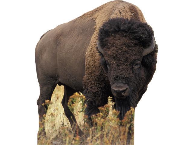 Bison-Lifesized Standup