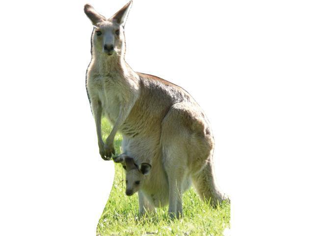 Kangaroo-Lifesized Standup