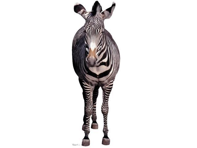 Zebra-Lifesized Standup