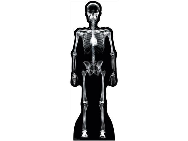 X Ray Skeleton Lifesized Standup