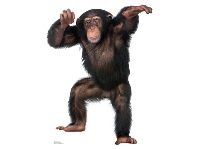 Young Chimpanzee Cardboard Standup
