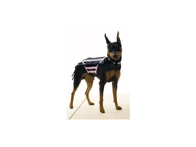 Doginatrix Pk-Bk Dog Costum Medium Costume