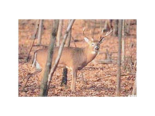 Delta #101 Whitetail Deer Target