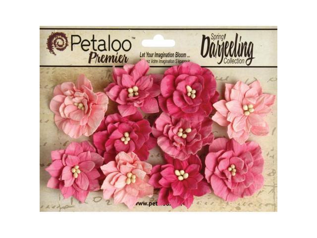 Darjeeling Teastained Dahlia Flowers 10/Pkg-Pink