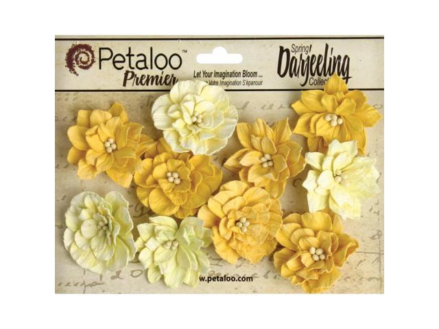 Darjeeling Teastained Dahlia Flowers 10/Pkg-Yellow
