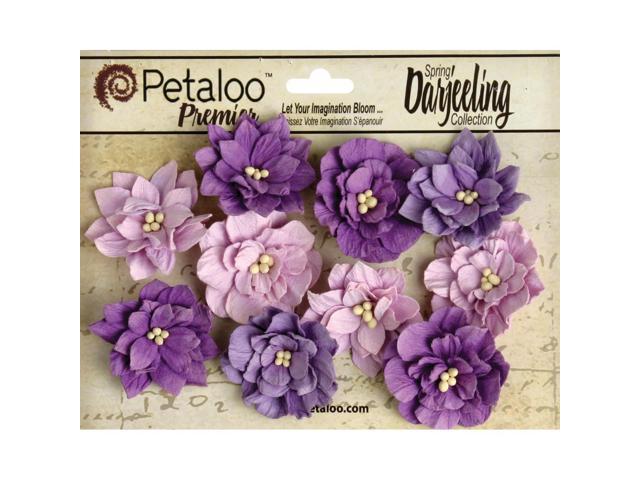 Darjeeling Teastained Dahlia Flowers 10/Pkg-Purple