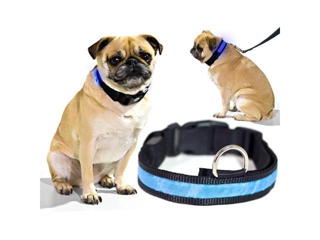 Blue LED Light Dog Collar - Small - Dog Pet Night Safety Fashionable Flashing Light Up Collar Nylon Large Adjustable