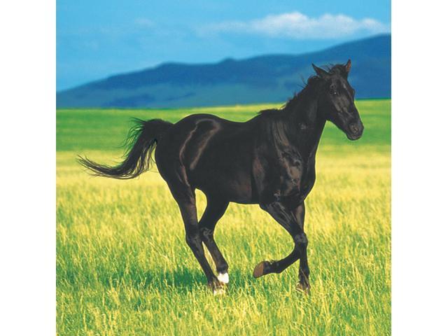 16 Pack Beverage Napkins Wild Horses