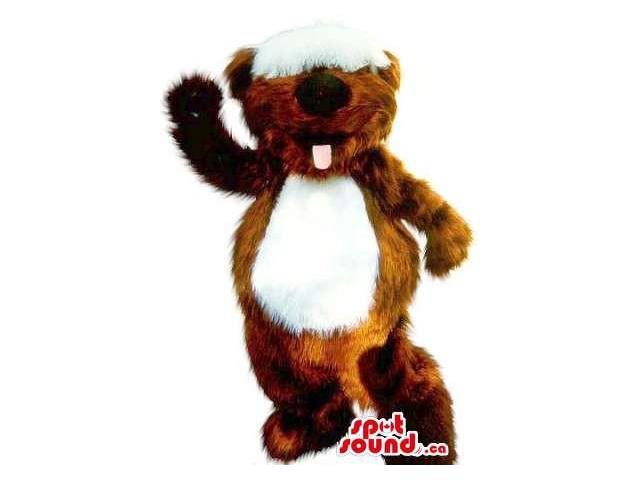 Cute Brown Woolly Squirrel Plush Canadian SpotSound Mascot With A White Belly