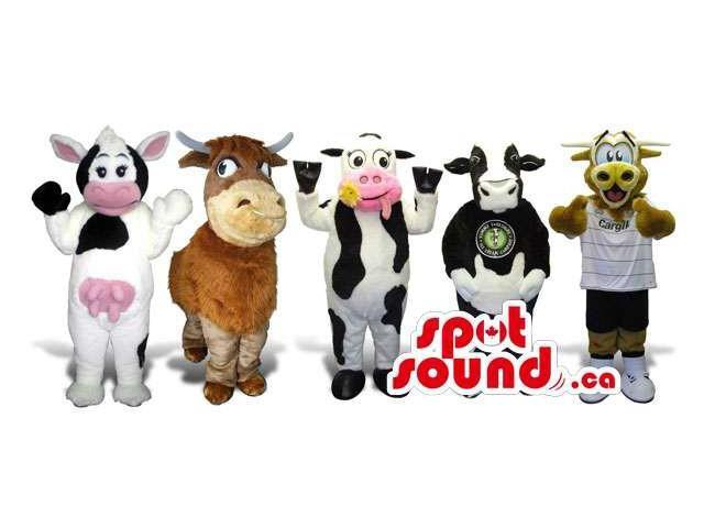 Group Of Five Cow Plush Canadian SpotSound Mascots In Various Sizes And Colors