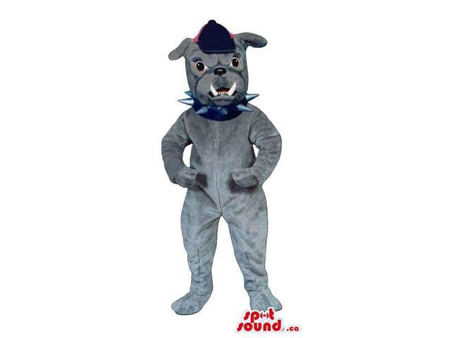 Angry Grey Bulldog Canadian SpotSound Mascot Dressed In A Cap And A Studded Collar