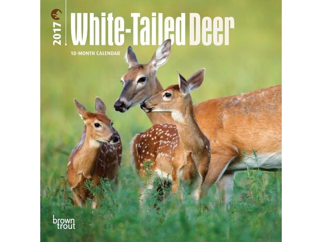 a history of the white tailed deer in the united states Ohio is a state in the midwestern united states ohio is the white-tailed deer tree that are perfect for students to learn about the history of ohio.