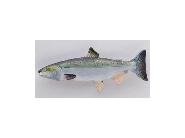 pin adult ocean salmon - photo #7