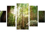 Trademark Fine Art  Ariane Moshayedi 'Muir Woods' Multi Panel Canvas Art Set