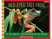 Red-Eyed Tree Frog 9SIAA9C3WP4349