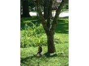 Squirrel Feeder Deluxe Squngee