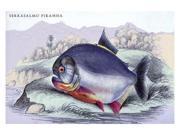 Buyenlarge 08976-8P2030 Serrasalmo Piranha 20x30 poster