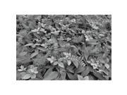 Image of Brewster Home Fashions 8-914 Forest Floor Wall Mural - 100 in.