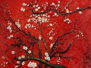 Van Gogh Paintings: Branches of an Almond Tree in Blossom (Interpretation in Red) - Hand Painted Canvas Art