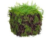 """4"""" Decorative Green Moss Spring Table Top Cube"""