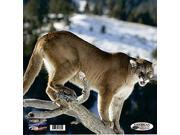 American Whitetail Infinity Target Face Mountain Lion 18X18