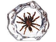 Tarantula with Web Acrylic Desktop Display