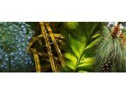 Leaves with rain drops Poster Print by Panoramic Images (36 x 15)