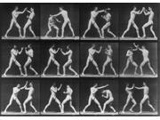 Muybridge Locomotion Men Boxing 1887 Poster Print by Science Source (24 x 18)