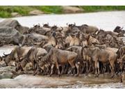 Wildebeest herd wildlife, Serengeti NP, Tanzania Poster Print by Adam Jones (35 x 23)