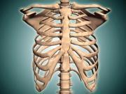 Close-up view of human rib cage Poster Print (16 x 12) 9SIA1S74CV4462