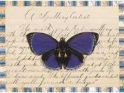 Butterfly Collage Spelling Contest Poster Print by William Gould-Porter (9 x 12)
