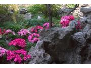Flowers and Rocks in Traditional Chinese Garden, China Poster Print by Keren Su (24 x 15)