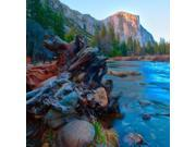 Tree roots in Merced River in the Yosemite Valley Poster Print by Anna Miller (27 x 27)