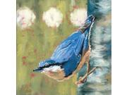 Life Nuthatch Poster Print by Molly Reeves (12 x 12)