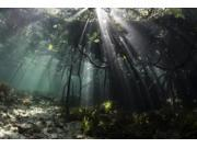 Sunlight shines into a blue water mangrove forest in Raja Ampat Indonesia Poster Print by Ethan DanielsStocktrek Images (17 x 11)