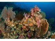 Reef scene with gorgonian sea fans and soft corals North Sulawesi Poster Print by Mathieu MeurStocktrek Images (17 x 11)