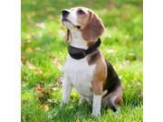 Pet Training Collar Electric Anti Bark No Barking Tone Shock Training Collar for Small Pet Dog — Black 9SIA1ZZ6501445